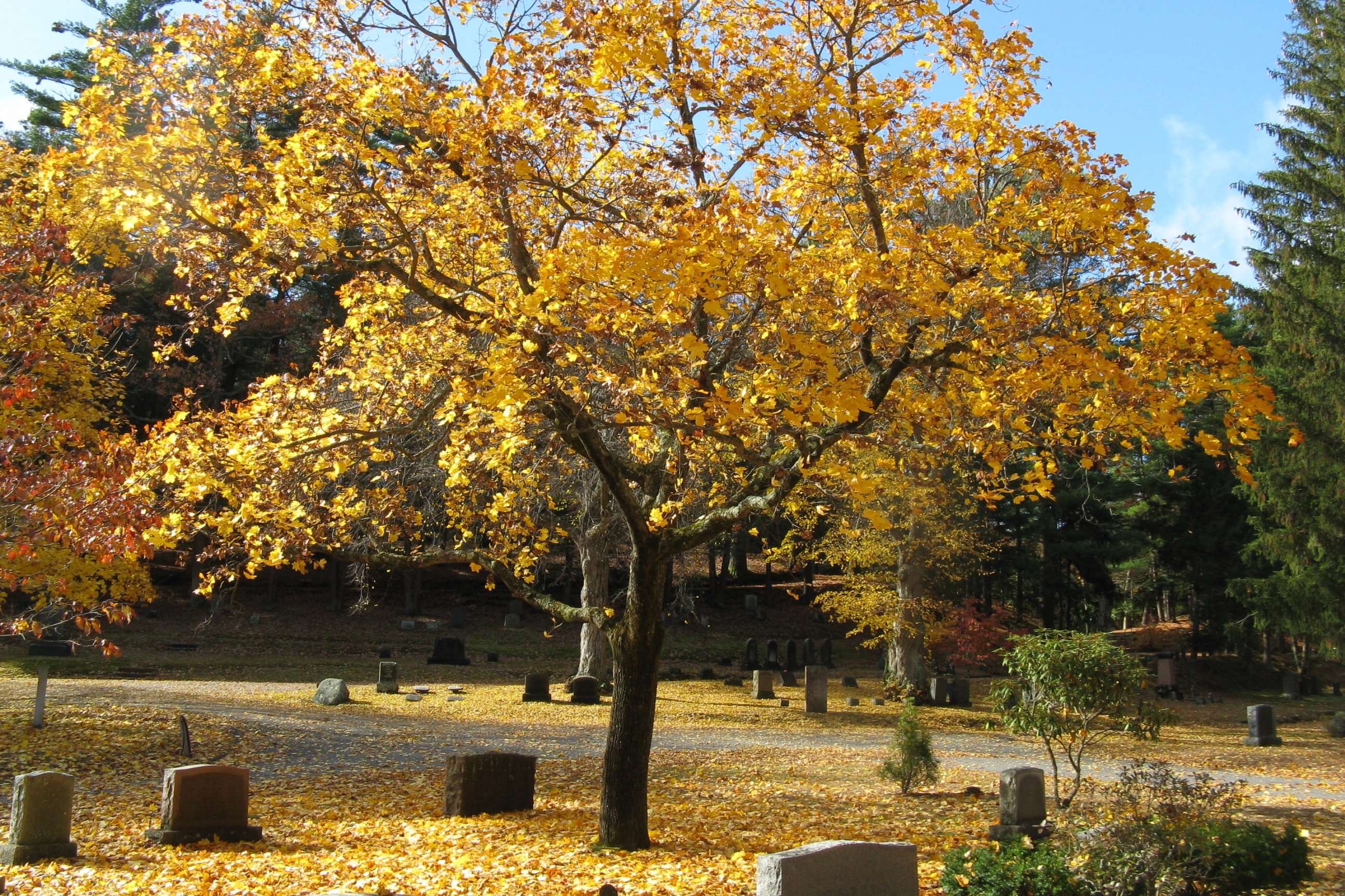 Sleepy_Hollow_Cemetery,_Concord_MA