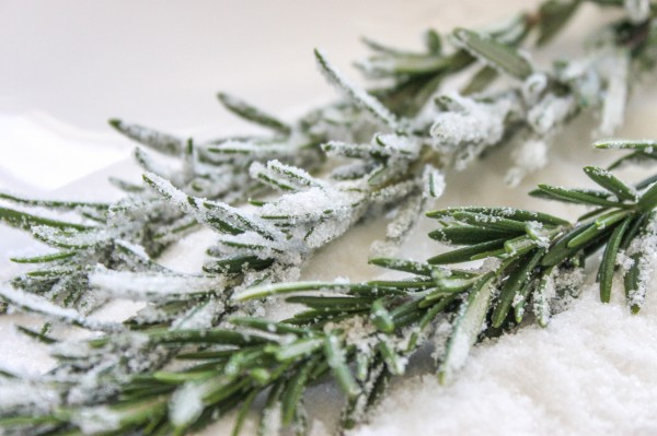 Candied-Rosemary-600x399