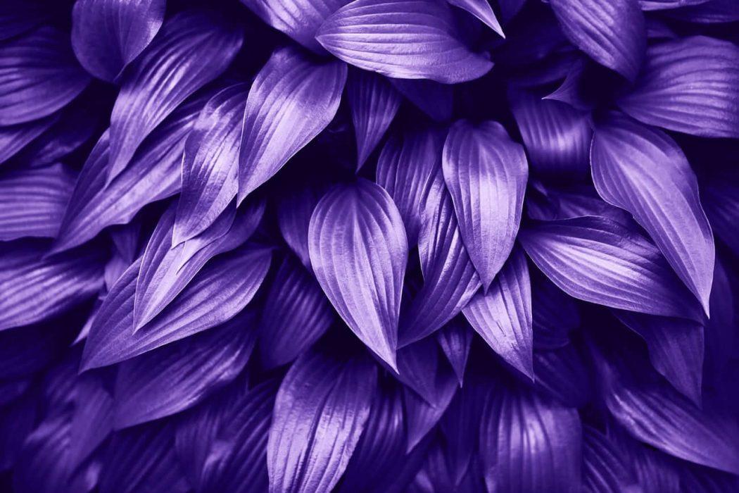 ультрафиолетовый цвет 2018